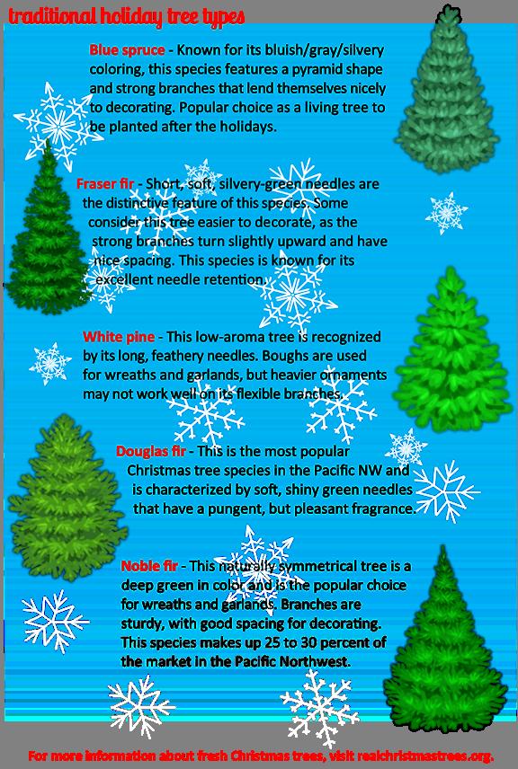 Fresh Christmas Trees.Fresh Cut Christmas Trees 101 Windermere Greenwood
